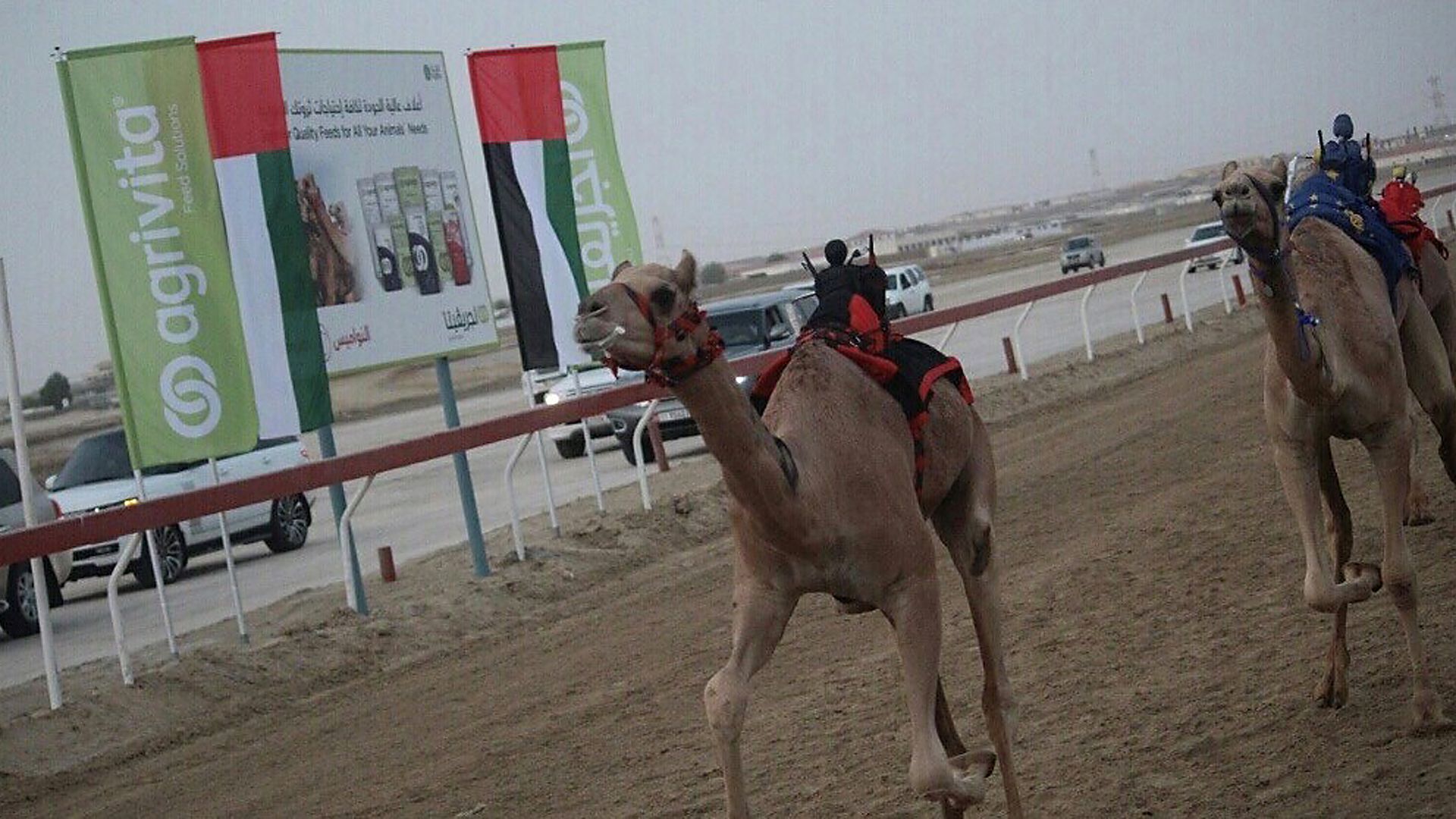 Agrivita is the proud partner of and the camel feed of choice for the season's best camel Races.